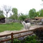 Киевский зоопарк: мой отзыв о посещении зоопарка